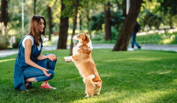 Beneficios saludables de tener un perro
